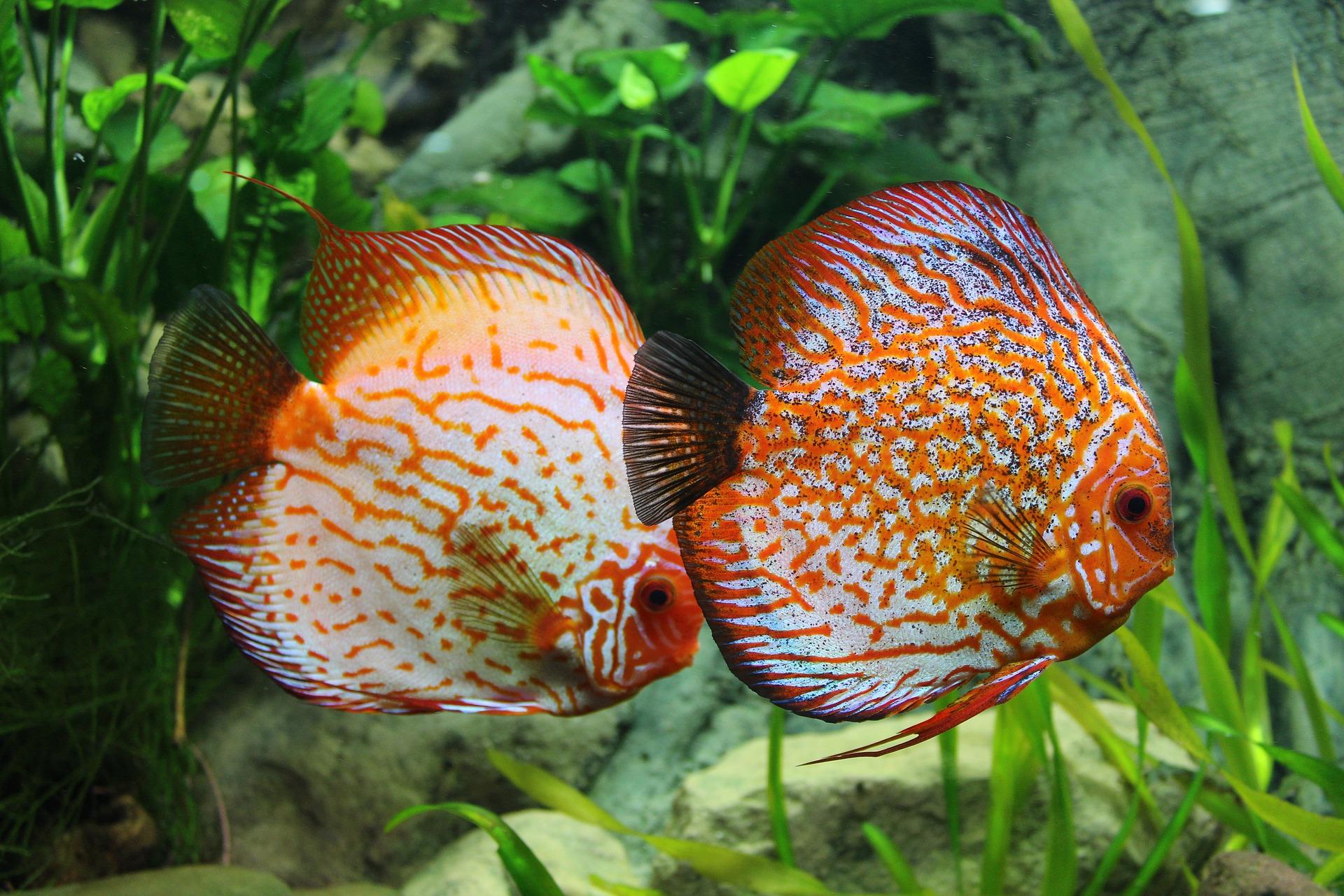 df8dceb5dcaf Akvarijní ryby – jednoduché rozdělení - Akvaportál